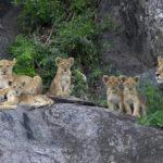 Serengeti_Biggs (2)