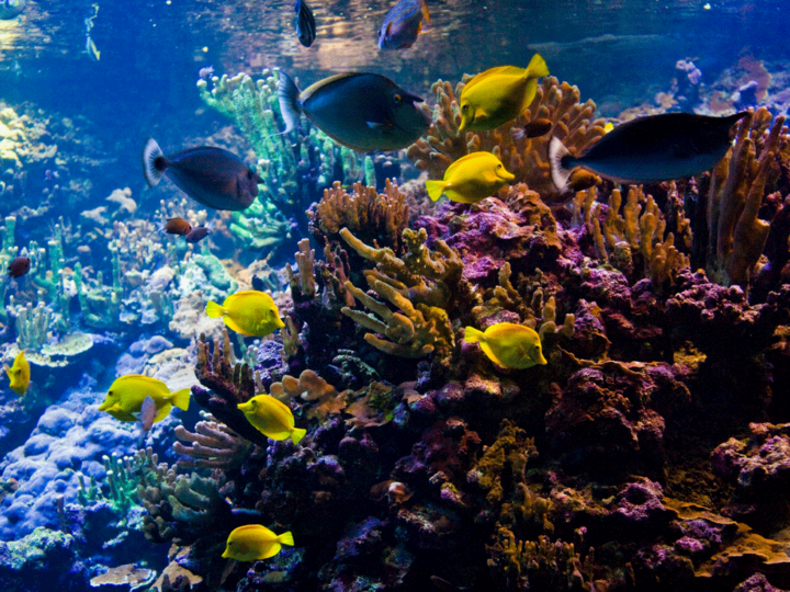 Enchanting glimpses of fish and coral while snorkeling in Hawaii