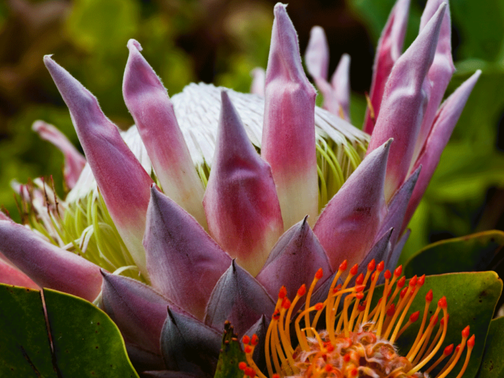 Flowers and fauna on the North Shore of Oahu